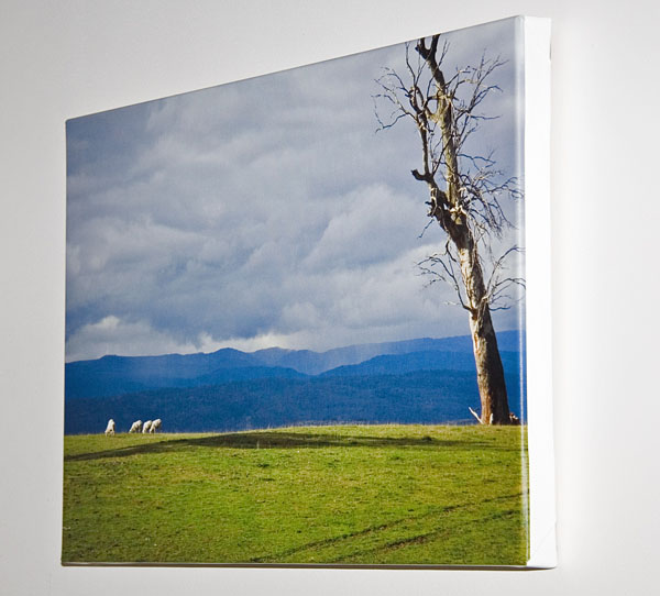 "canvas print of "" Grazing "" hanging on the wall"