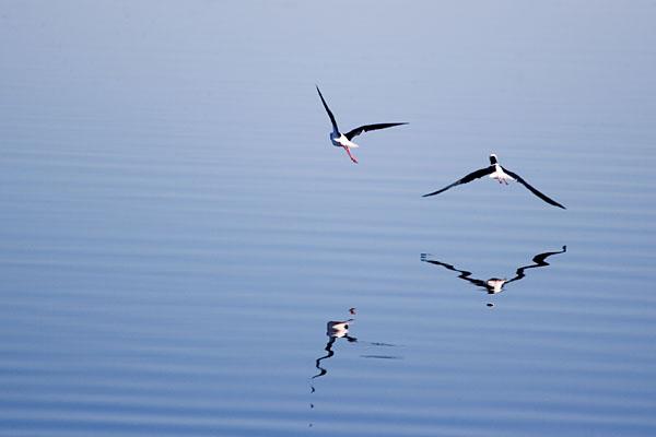 Αποτέλεσμα εικόνας για birds flying over a lake